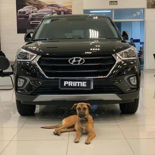 Uma concessionária da Hyundai no ES, adotou um cão!1