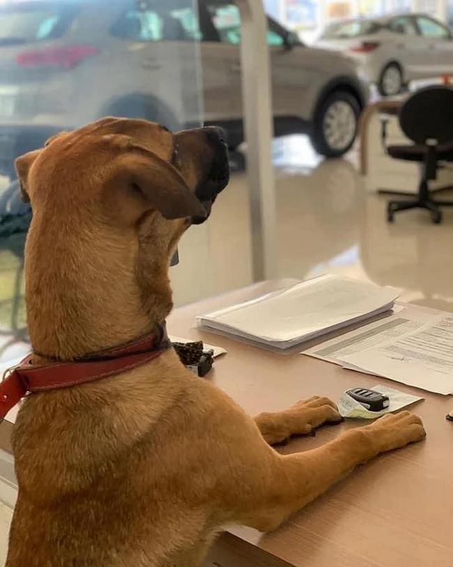 Uma concessionária da Hyundai no ES, adotou um cão!2