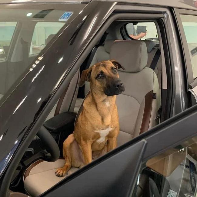 Uma concessionária da Hyundai no ES, adotou um cão!4