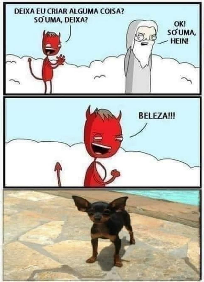 Cachorro criado pelo capiroto