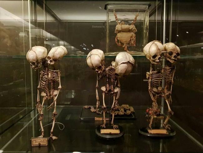 Maior museu de anomalias do mundo 28
