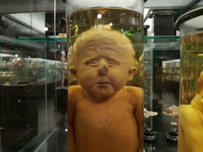 Maior museu de anomalias do mundo 7