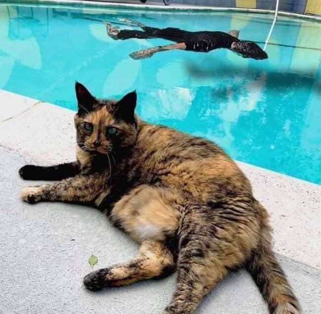 A reação desse gato ao ver o dono se afogando é emocionante. 4