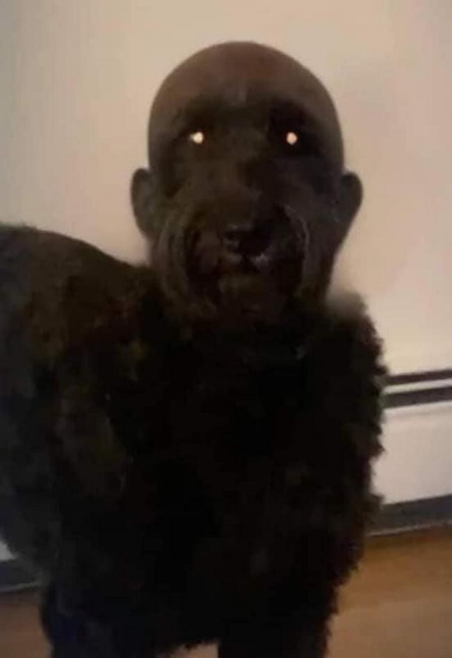 Mandei meu cachorro pro pet shop e ele voltou assim2