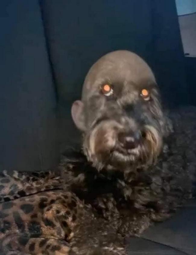 Mandei meu cachorro pro pet shop e ele voltou assim3