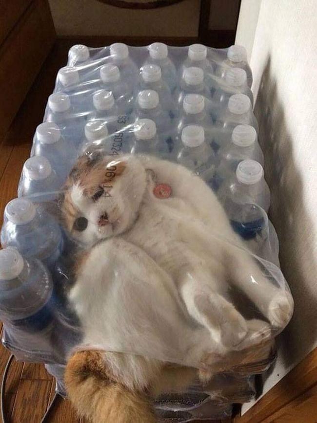 Gatos são mais tranquilos