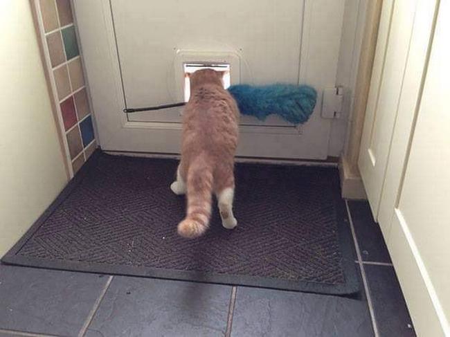 Gatos são mais tranquilos12
