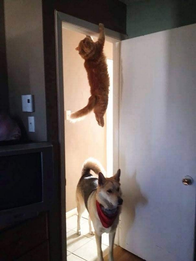 Gatos são mais tranquilos14