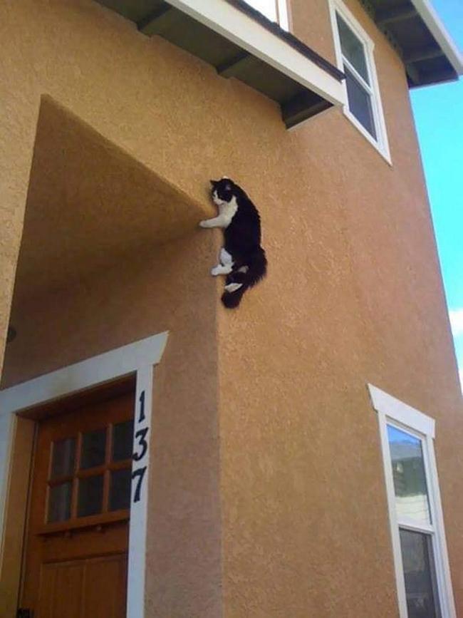 Gatos são mais tranquilos7
