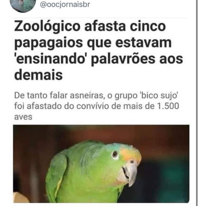 Papagaios vida loka
