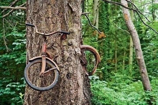 Um dia a natureza vai levar tudo de volta5