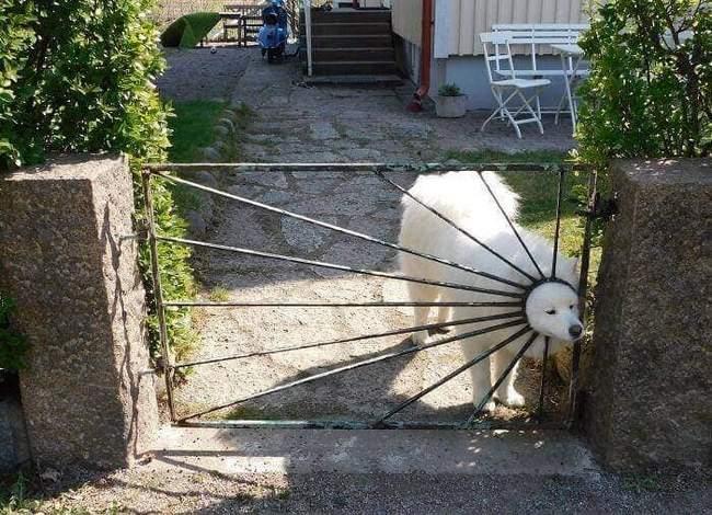 Animais em situações estranhas15