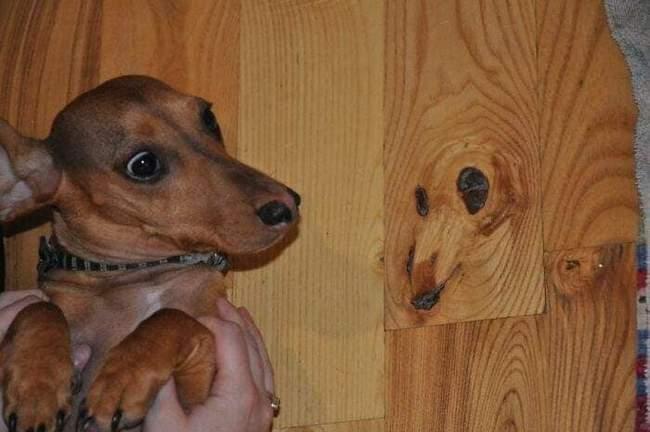 Animais em situações estranhas2