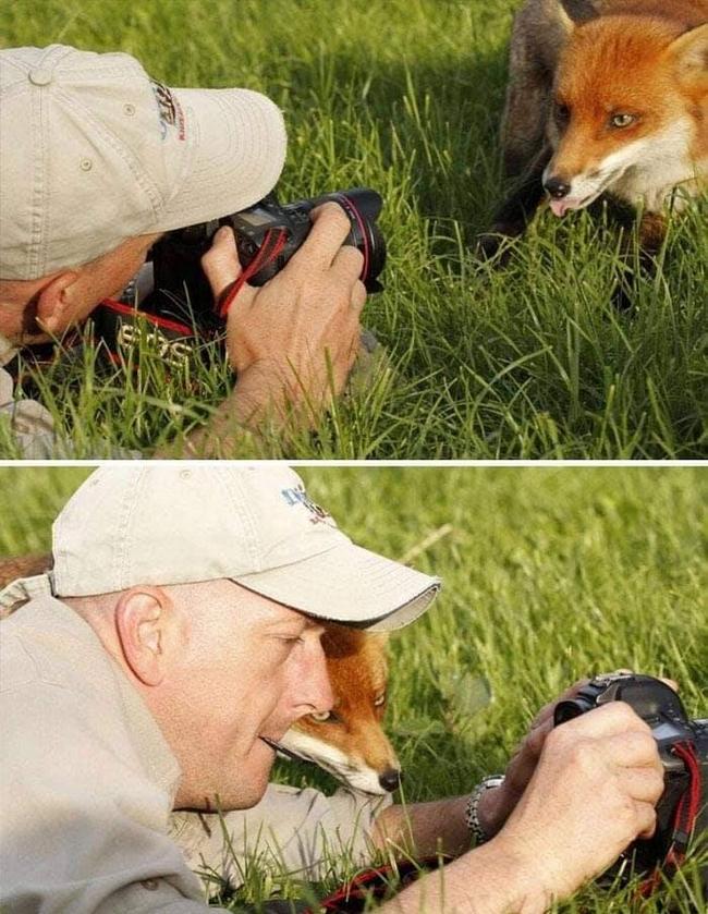 Animais em situações estranhas26