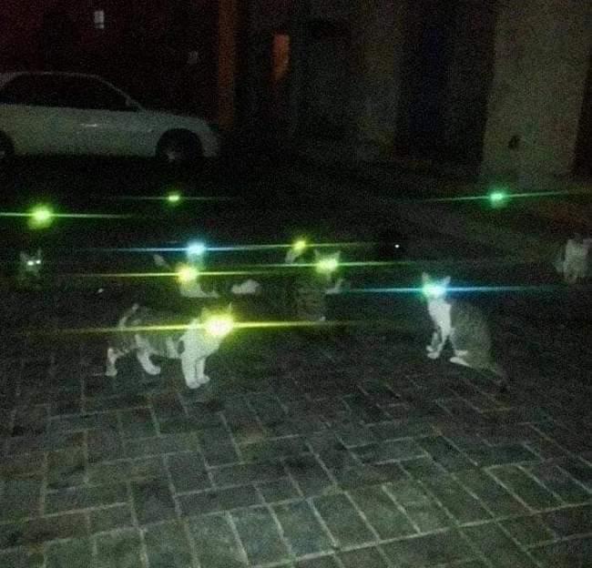Animais em situações estranhas5