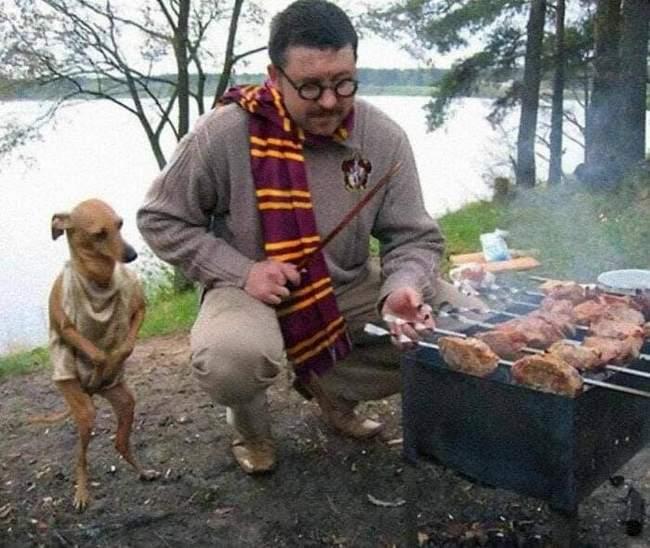 Animais em situações estranhas7