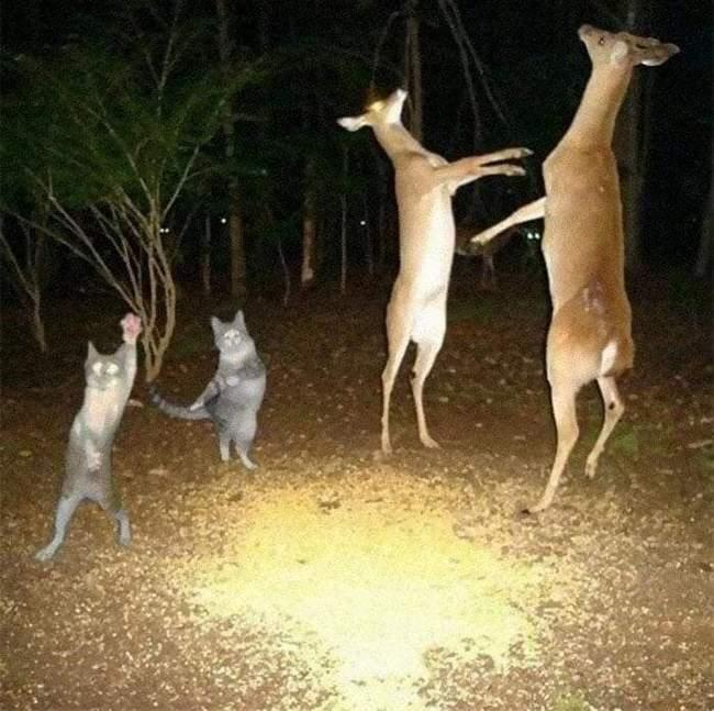 Animais em situações estranhas8