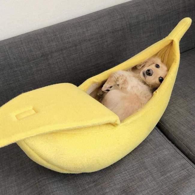 Todo Cachorro precisa de uma Cama de Banana 1