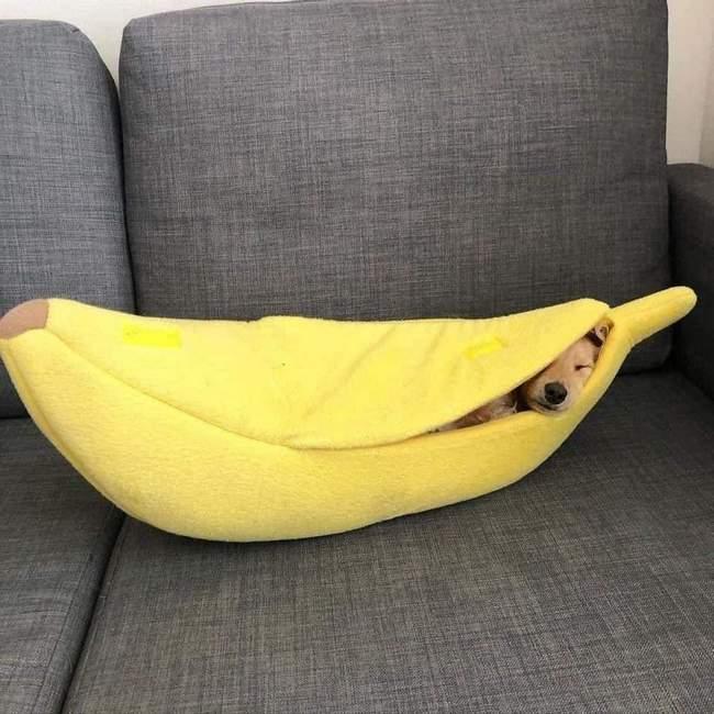 Todo Cachorro precisa de uma Cama de Banana 2