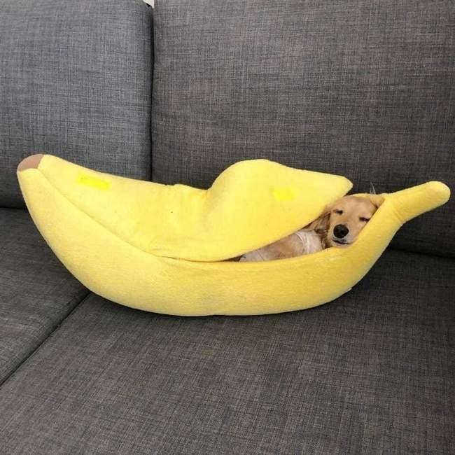 Todo Cachorro precisa de uma Cama de Banana