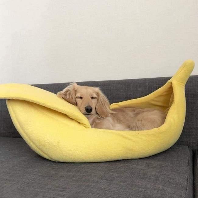 Todo Cachorro precisa de uma Cama de Banana 4