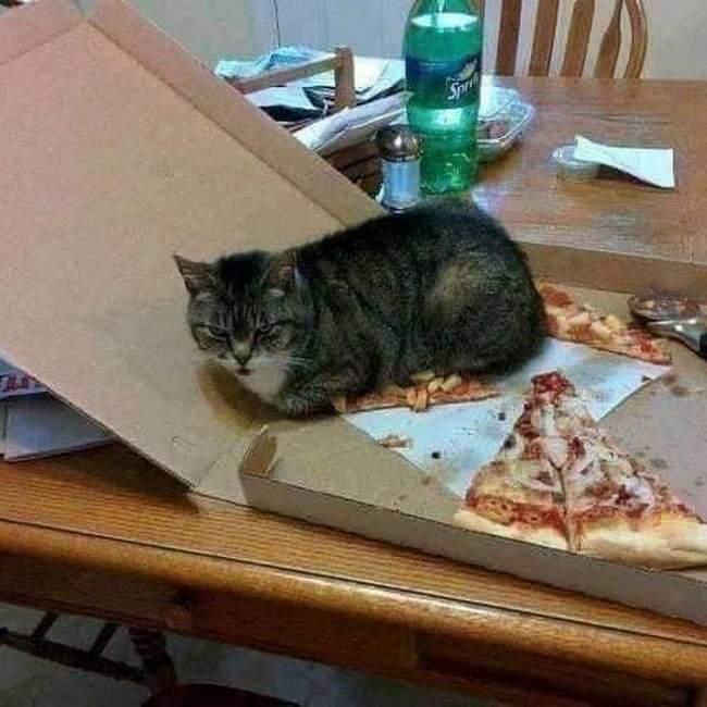 Você está entediado na sua vida, Pegue um gato! 1