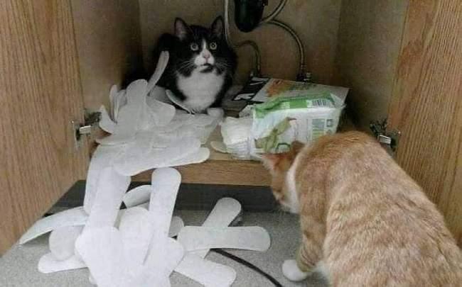 Você está entediado na sua vida, Pegue um gato! 10