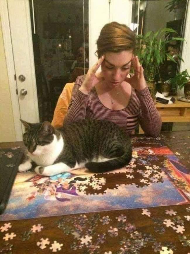 Você está entediado na sua vida, Pegue um gato! 11