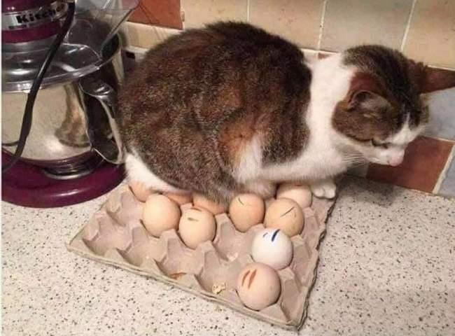 Você está entediado na sua vida, Pegue um gato! 4