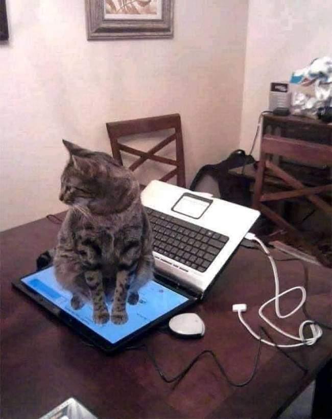 Você está entediado na sua vida, Pegue um gato! 6