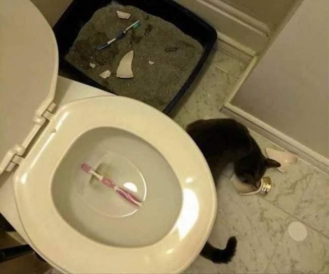 Você está entediado na sua vida, Pegue um gato! 7