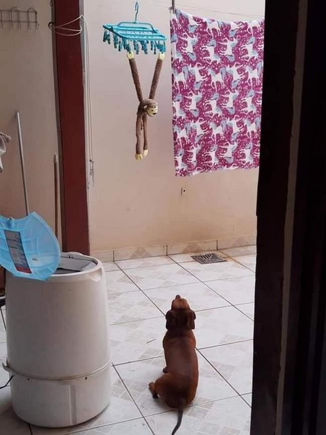 Minha mãe lavou meu macaco, agora fico aqui chorando até ele secar